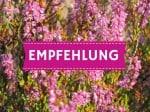 Wietzendorf-Reiningen: Brammers Landhotel zum Wietzetal