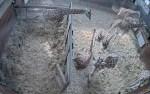 Screenshot des Live-Streams aus dem Giraffenhaus Quelle: Serengeti-Park Hodenhagen
