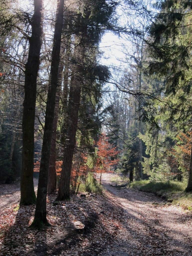 Sonniger Waldweg zwischen Einem und dem Wilseder Berg im Februar.