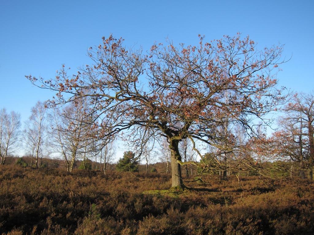Sonniger Wintertag in der Lüneburger Heide