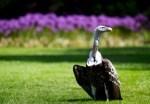 Am 3. September ist der Weltgeiertag: Weltvogelpark Walsrode sensibilisiert für die Wichtigkeit der bedrohten Aasfresser