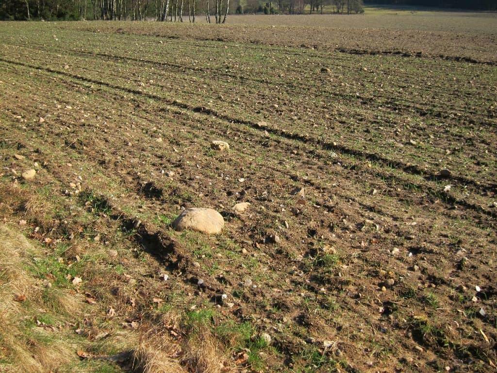 Die Böden in der Lüneburger Heide sind reich an Steinen jeder Größe.