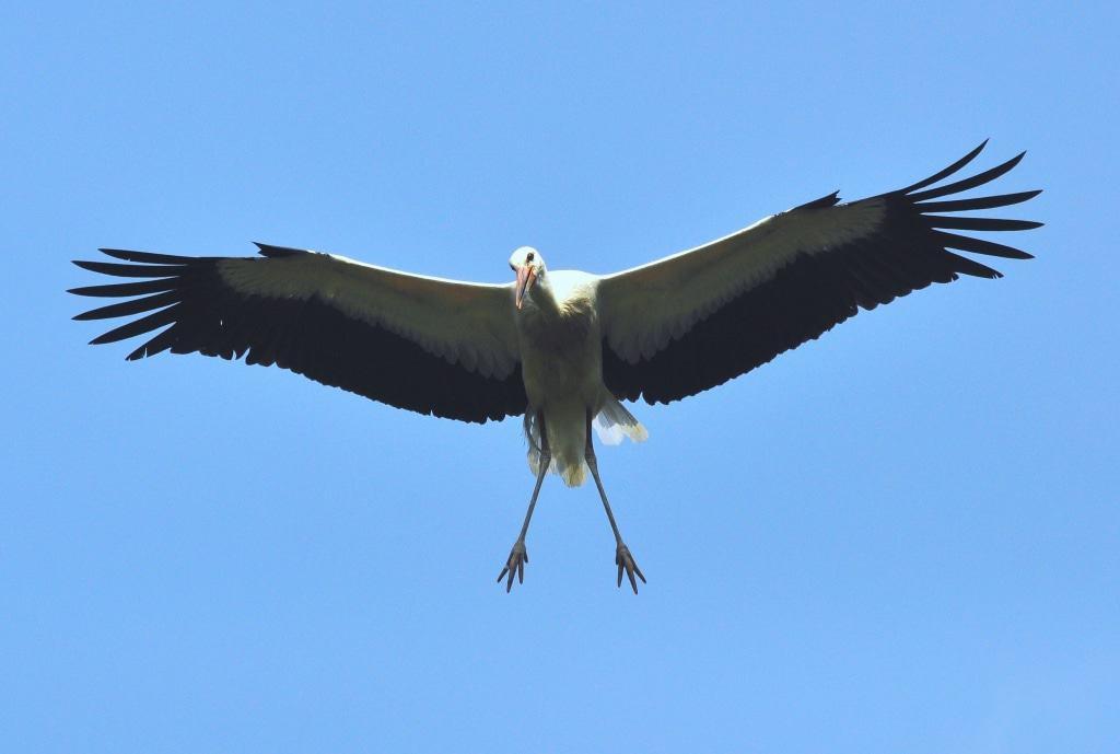 Foto: Weltvogelpark Walsrode