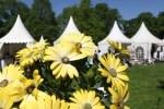Ebenfalls im Angebot: Schätze für den Garten. Foto: Evergreen, Kassel