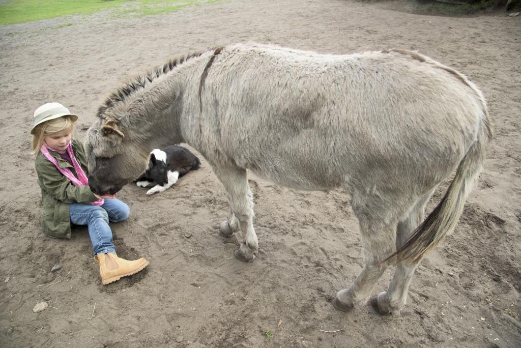 Neu: Die Streichel-Safari: Hier können die Gäste unbegrenzte Zeit in direkter Nähe zu den Tieren verbringen. Foto: Serengeti-Park Hodenhagen