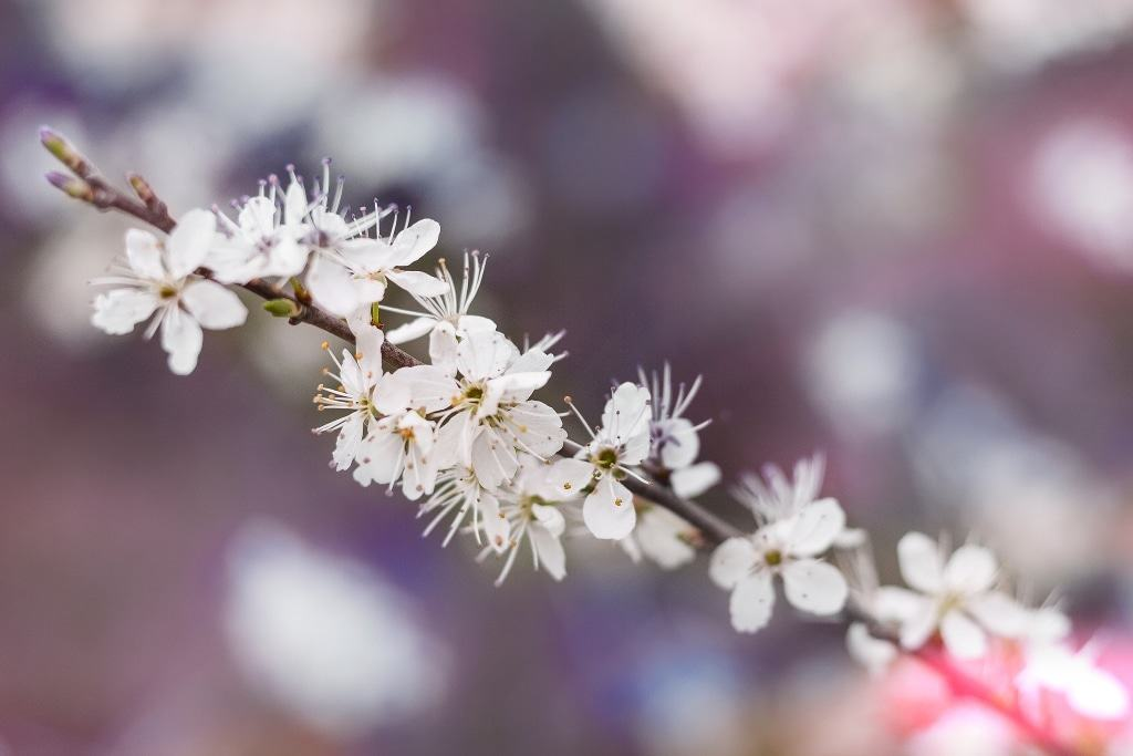 Frühlingsblüten - Unsplash.com - Vanessa von Wieding