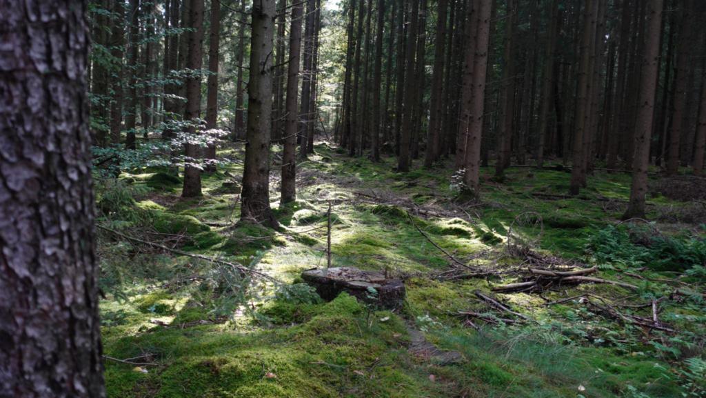 Impressionen vom Walderlebnispfad Schooten