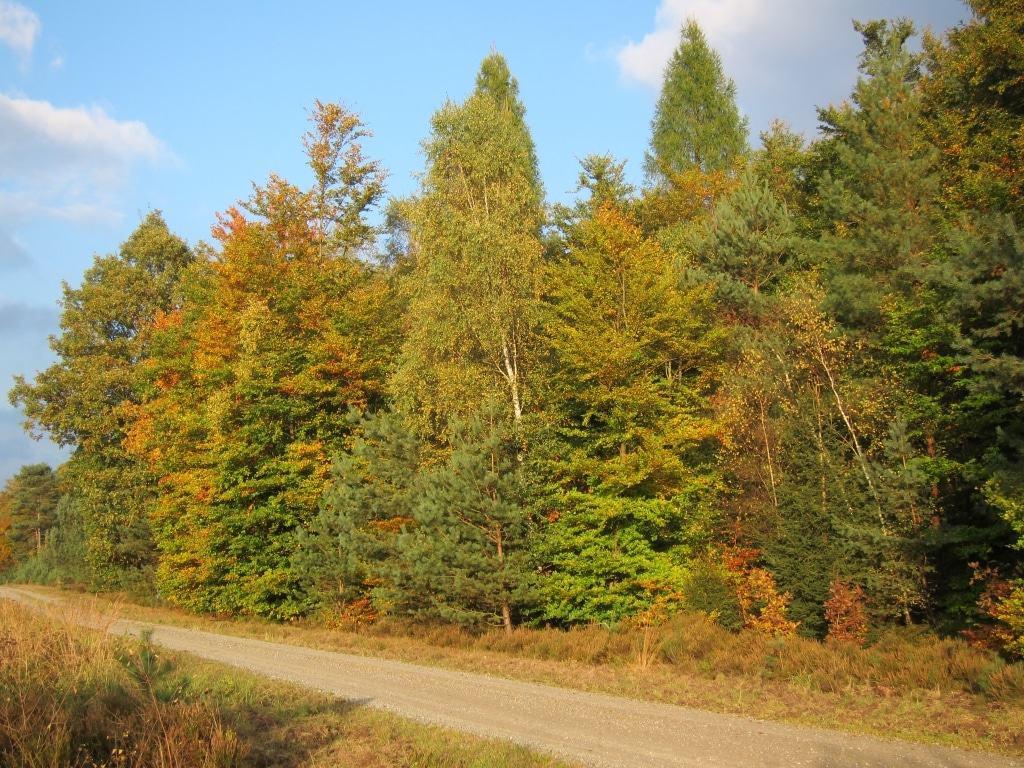 Waldrand Laubmischwald im Herbst im Lüßwald in Naturpark Südheide