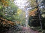 """Im Naturpark Südheide: Wanderweg """"Der Urwald im Lüß"""" im Herbst"""
