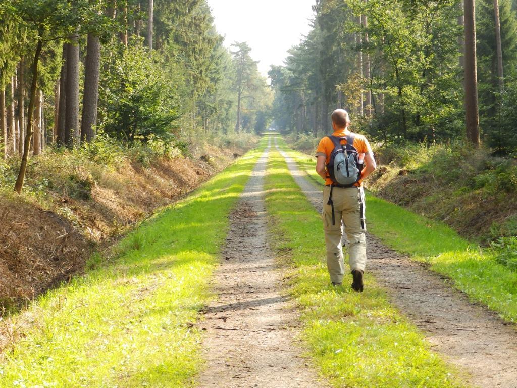 Wandern durch den Forst Malse auf dem NORDPFAD Hölzerbruch-Malse (c) TouROW