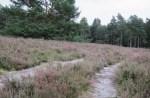 Ausflugstipp nicht nur zur Heideblüte: Eine Wanderung auf dem Heidepanoramaweg