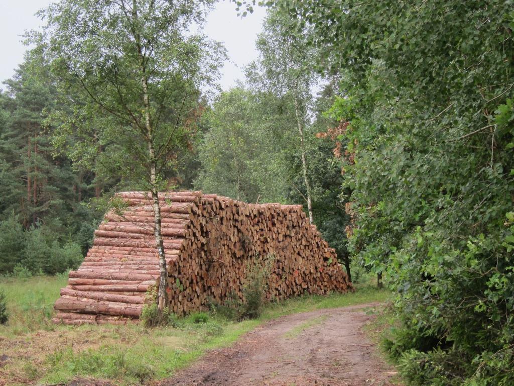 Frischgeschlagene Holzstämme in einem großen Stapel am Wegesrand