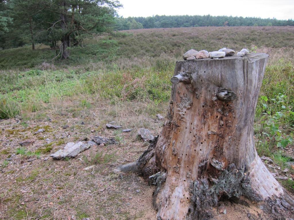 Am Wegesrand - Heidepanoramaweg Misselhorner Heide in der Nähe des Tiefentals