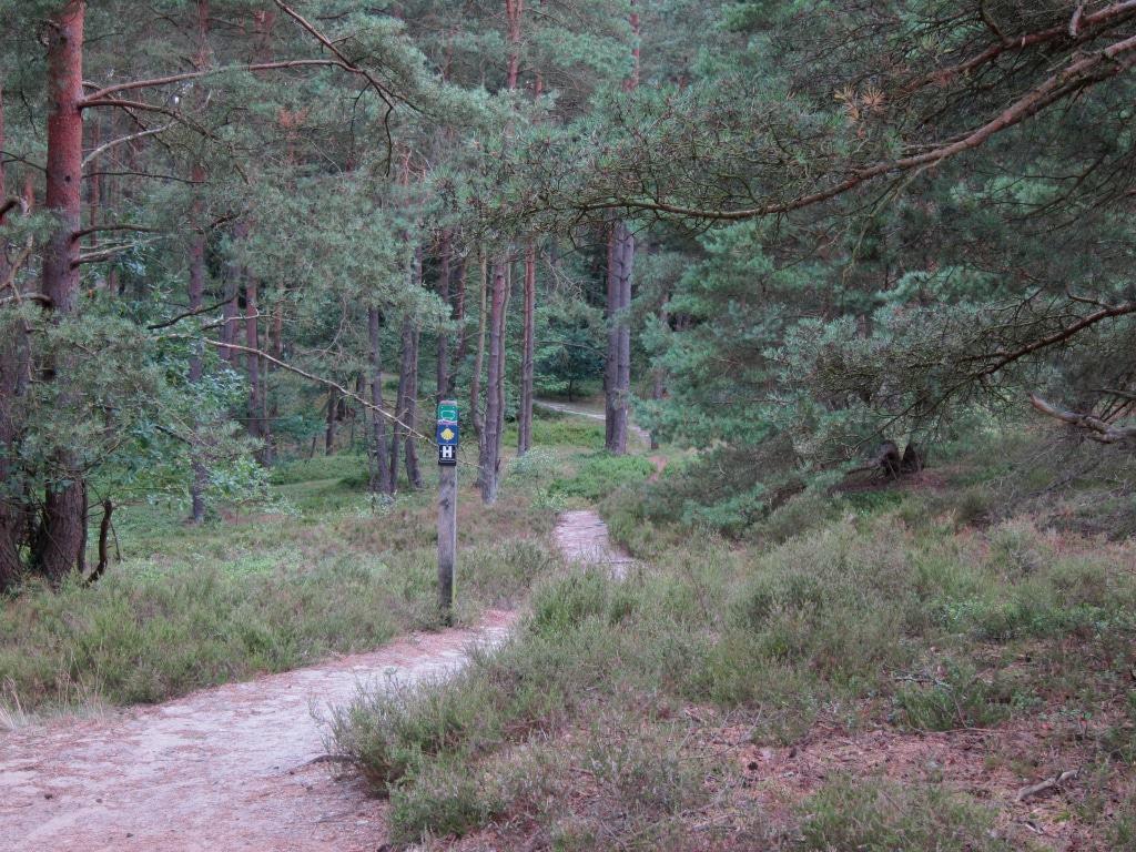 Der Weg schlängelt sich leichtem Gefälle durch Wald- und Heideflächen.