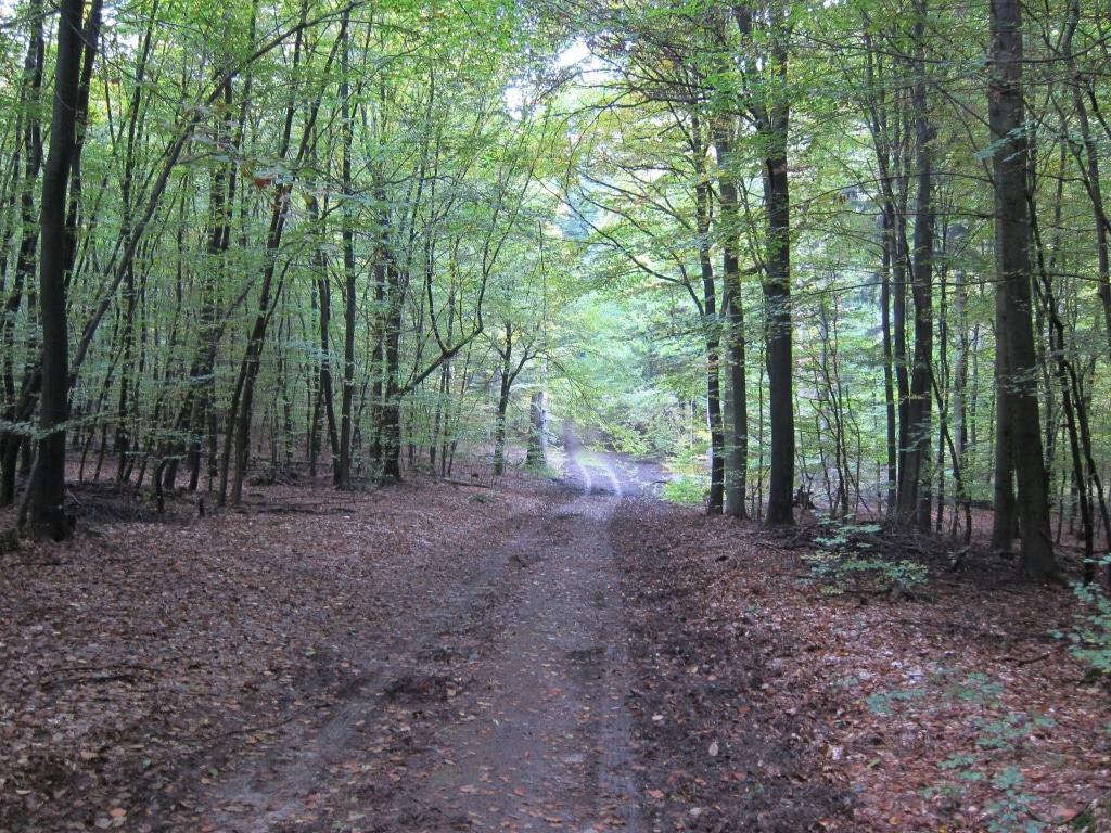 """Der Wanderweg """"Der Urwald im Lüß"""" hat nur geringe Steigungen und Gefällestrecken."""