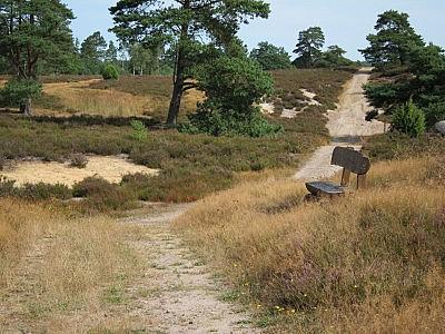 Heide-Panorama-Weg in Soderstorf-Schwindebeck in der Schwindebecker Heide