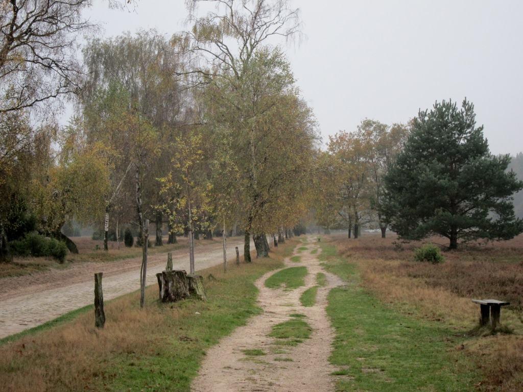 Wanderweg von Undeloh nach Wilsede durch die herbstliche Heidelandschaft
