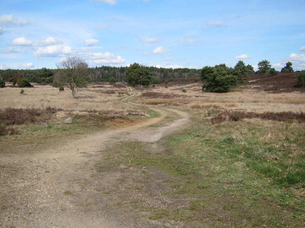Lüneburger Heide im zeitigen Frühjahr - geschwungener Weg durch die Heide in Bispingen-Timmerloh