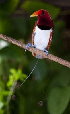 Neue Attraktion im Weltvogelpark Walsrode: Neue Paradiesvogelanlage