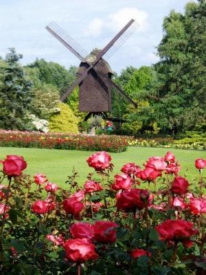 Foto Weltvogelpark Walsrode Blühende Rosenbeete mit Windmühle