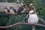 Kleine Küken, volle Nester: Jungvogelalarm im Weltvogelpark Walsrode