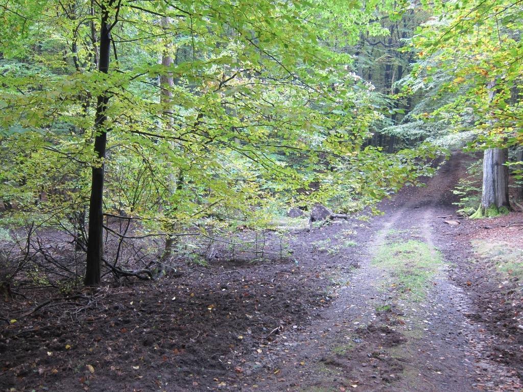 Lüßwald, Kreis Celle: Von Wildschweinen aufgebrochener Waldboden