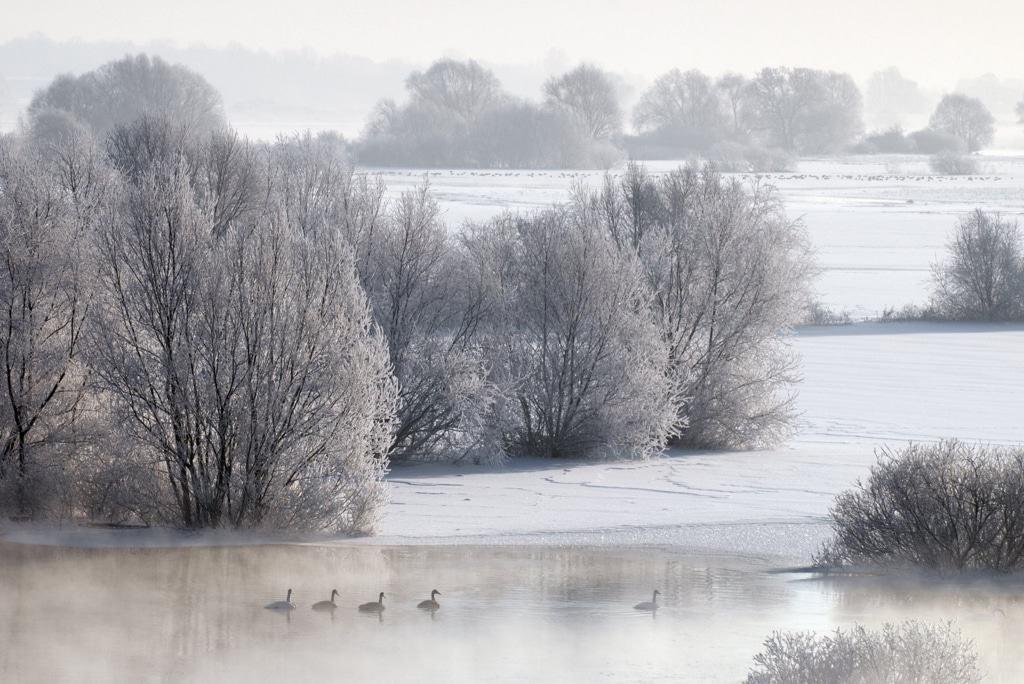 Winterhochwasser an der Elbe Foto: Dieter Damschen